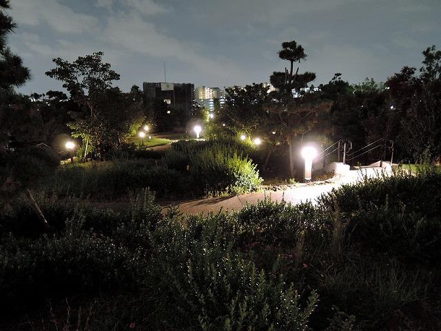 天空の庭で_c0062832_16124598.jpg