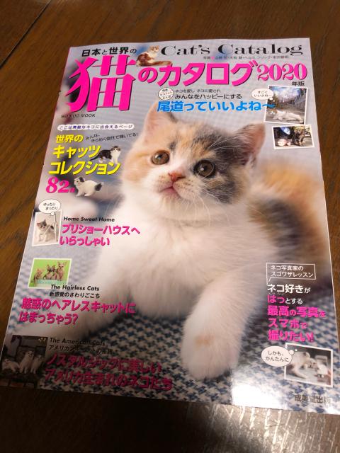 猫カタログ2020_e0048332_14232316.jpg