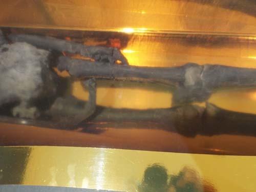 ぐるっとパスNo.10 古代オリエント博「ギルガメッシュ」展まで見たこと_f0211178_16295397.jpg