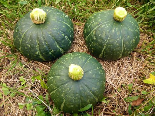 自然農畑 9月下旬~10月上旬_d0366590_17323372.jpg