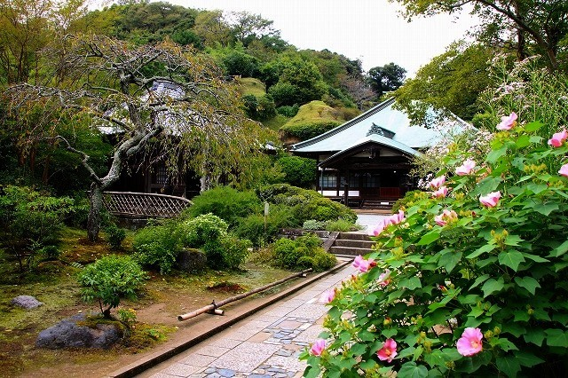 鎌倉の秋の花 海蔵寺 秋の花_f0374092_16255514.jpg