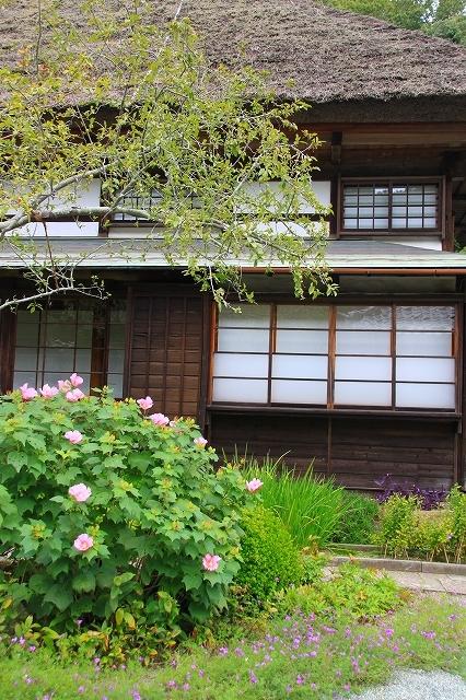 鎌倉の秋の花 海蔵寺 秋の花_f0374092_16290392.jpg
