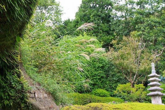 鎌倉の秋の花 海蔵寺 秋の花_f0374092_16294753.jpg