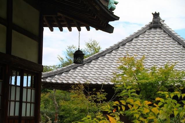 鎌倉の秋の花 海蔵寺 秋の花_f0374092_16300718.jpg