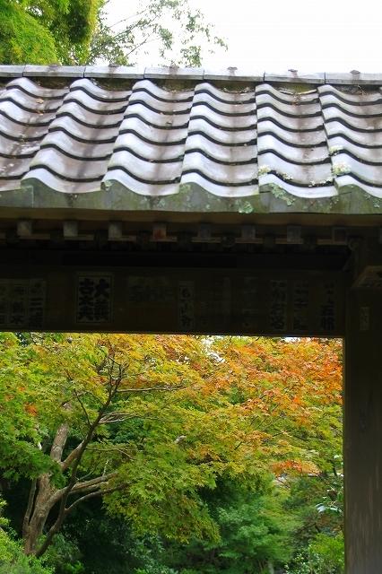 鎌倉の秋の花 海蔵寺 秋の花_f0374092_16310468.jpg