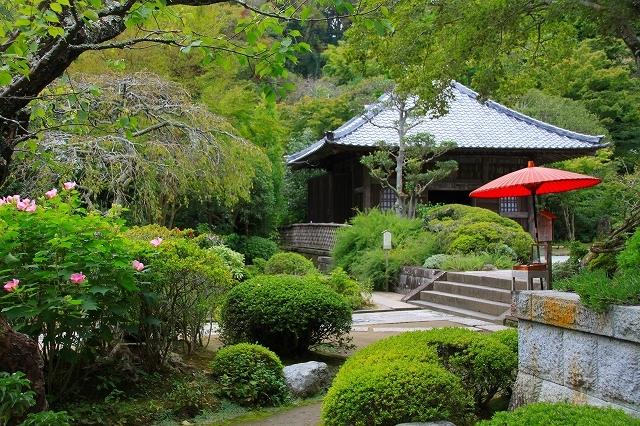 鎌倉の秋の花 海蔵寺 秋の花_f0374092_16330294.jpg
