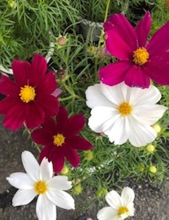 秋の花_f0061394_09390940.jpg