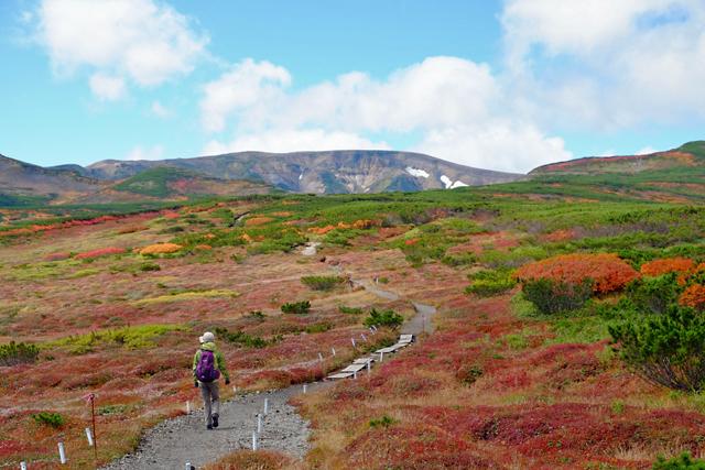 黒岳の紅葉♪ 山頂~お鉢平_f0179404_20090531.jpg