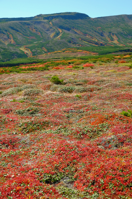 黒岳の紅葉♪ 山頂~お鉢平_f0179404_20094190.jpg