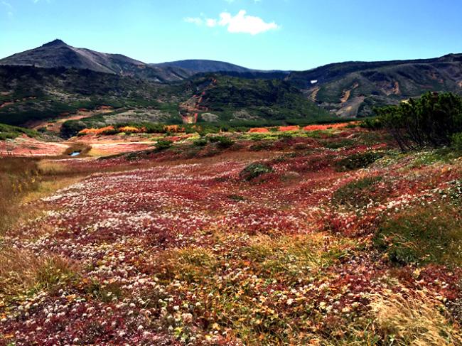 黒岳の紅葉♪ 山頂~お鉢平_f0179404_20292550.jpg
