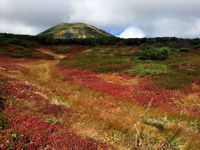 黒岳の紅葉♪ 山頂~お鉢平_f0179404_20294036.jpg