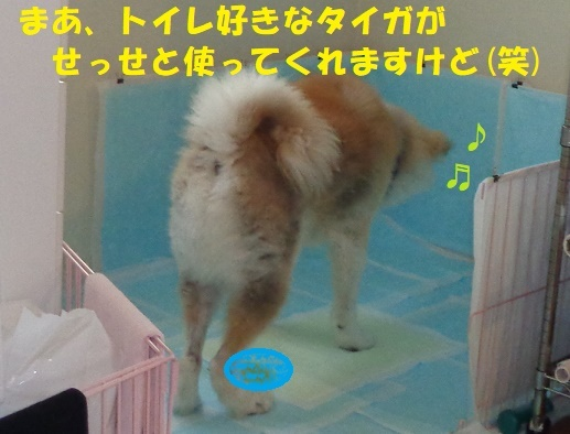 f0121712_00260939.jpg