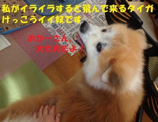 f0121712_00352831.jpg