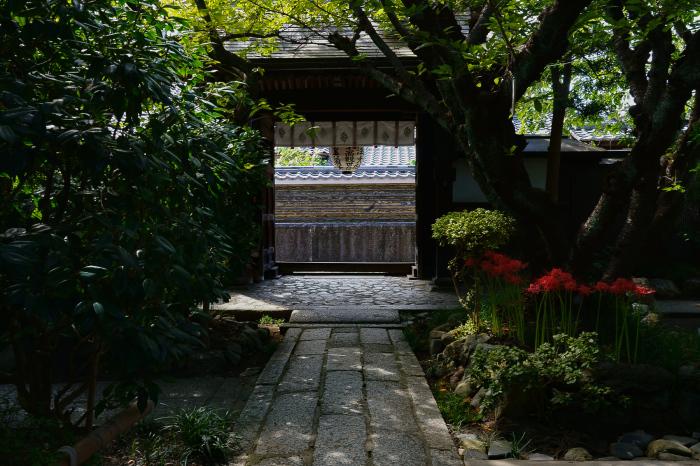 京の彼岸花 雨宝院_e0177413_09462315.jpg