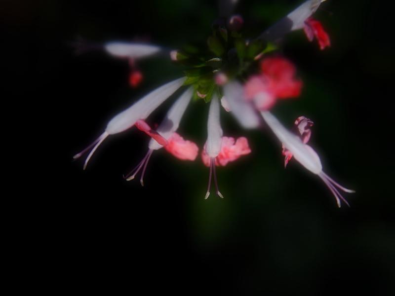 Autumn Garden_e0169421_21230227.jpg