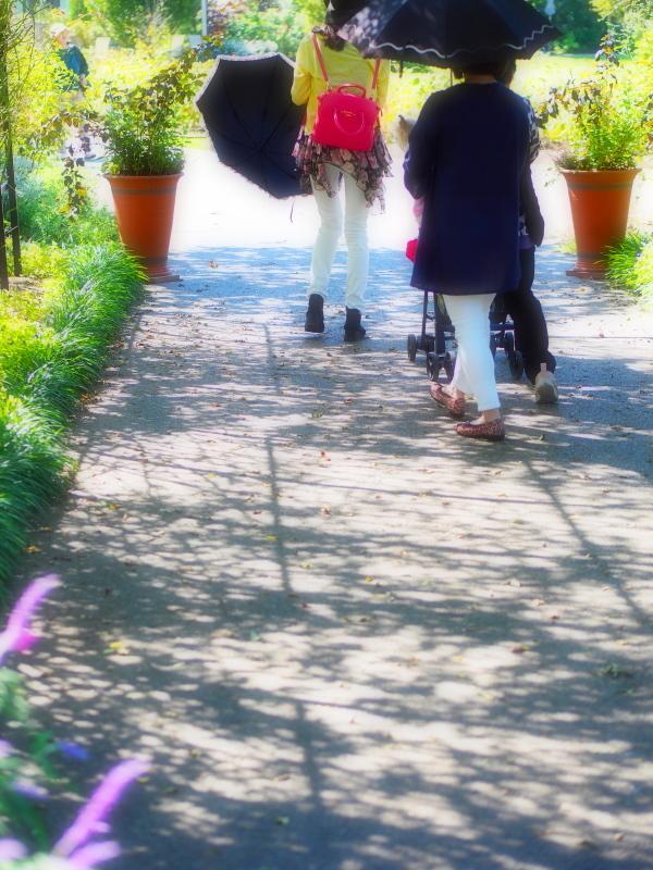 Autumn Garden_e0169421_21230302.jpg