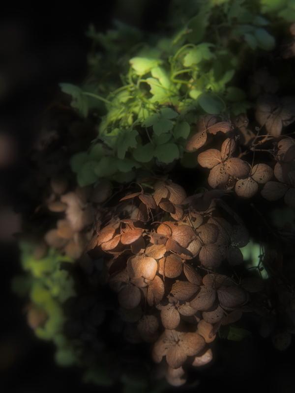 Autumn Garden_e0169421_21230382.jpg