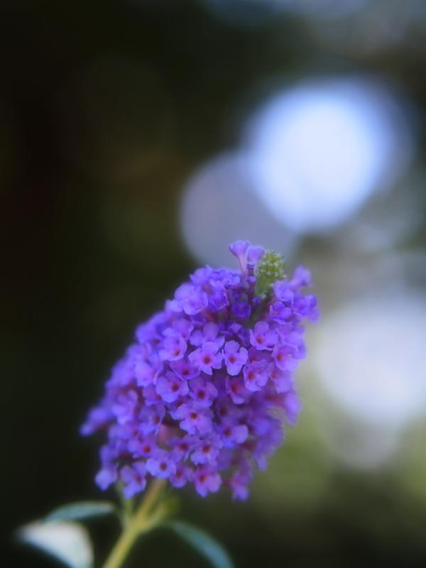 Autumn Garden_e0169421_21230427.jpg