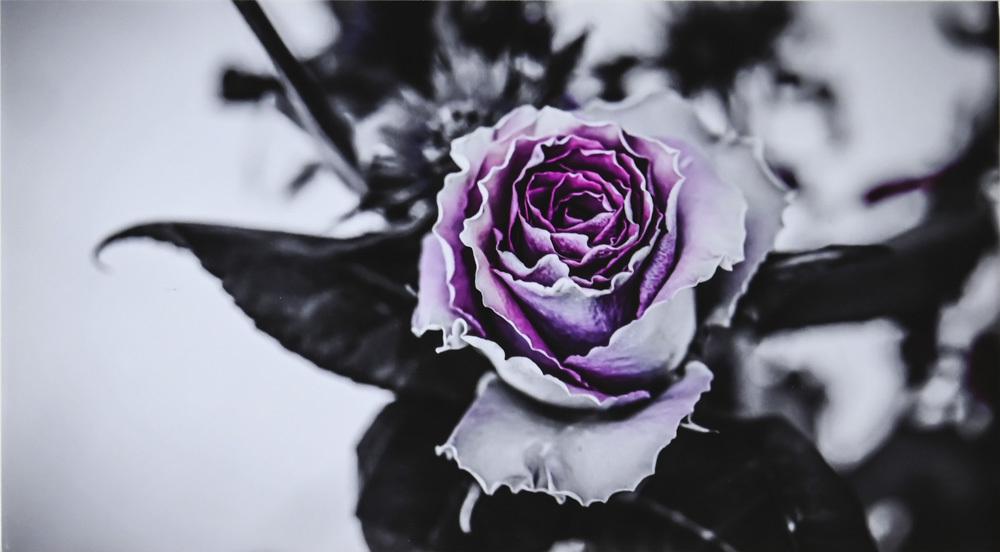 chiehanaさんのお花畑_d0265224_21212781.jpg