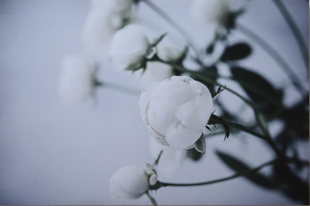 chiehanaさんのお花畑_d0265224_21212801.jpg