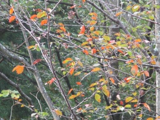 秋になると      10月 6日(日)_d0127634_08584233.jpg
