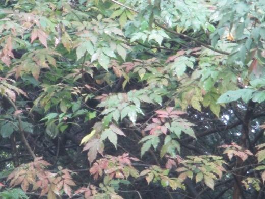 秋になると      10月 6日(日)_d0127634_09010073.jpg