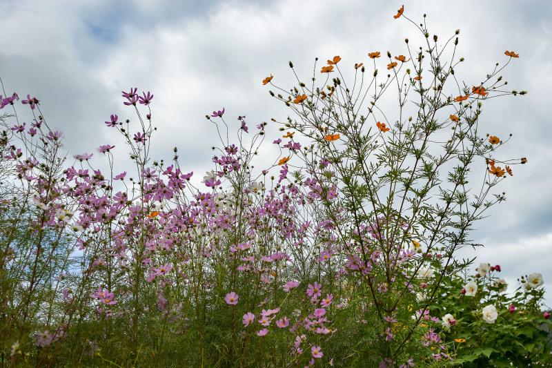 兄貴宅の庭にも秋が来る_d0246136_21165963.jpg