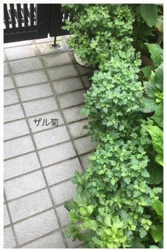 キャシュレス還元 & 飲み会_a0084343_13270392.jpeg