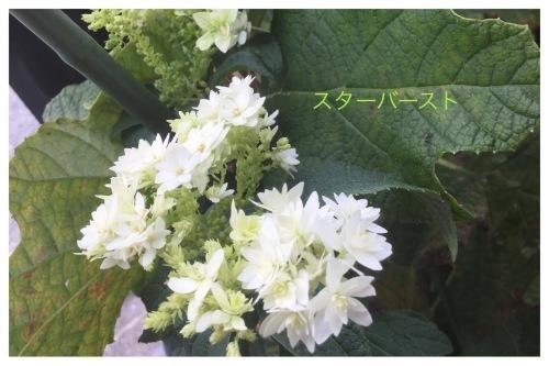 キャシュレス還元 & 飲み会_a0084343_14453159.jpeg