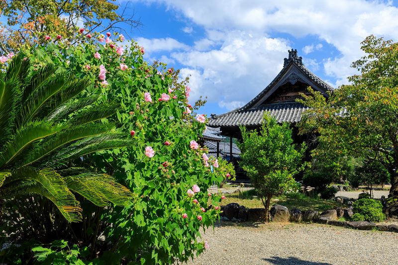 橘寺周辺の彼岸花光景_f0155048_1720256.jpg