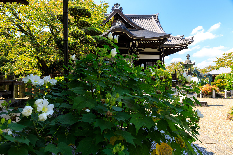 橘寺周辺の彼岸花光景_f0155048_17202823.jpg