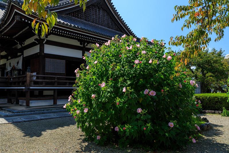 橘寺周辺の彼岸花光景_f0155048_17203088.jpg