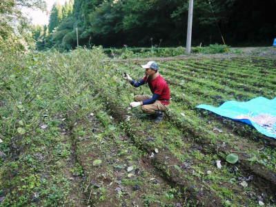 無農薬・無化学肥料で育てる「菊池水源産エゴマ」 令和元年度の『白エゴマ』を収穫しました!_a0254656_18291377.jpg