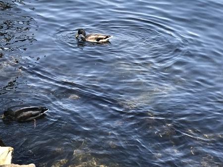 コモ湖でサクッとピッツァランチ♪_a0136671_02151085.jpg