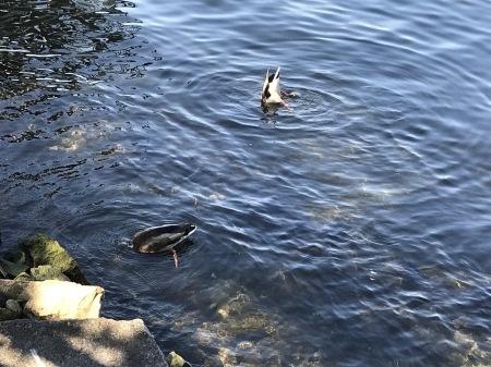 コモ湖でサクッとピッツァランチ♪_a0136671_02154228.jpg