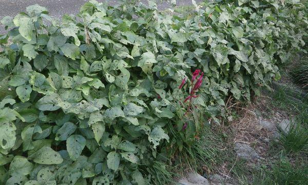 秋の収穫、蜜柑&黒豆&落花生_f0018078_18190432.jpg