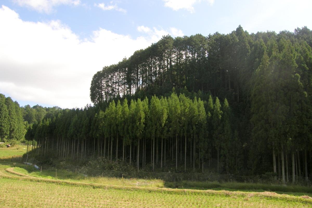京都一周トレイル 北山西部コース 前半_c0057390_16470505.jpg