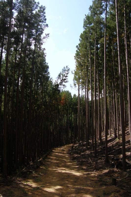 京都一周トレイル 北山西部コース 前半_c0057390_16471756.jpg