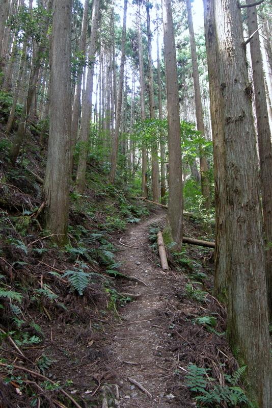 京都一周トレイル 北山西部コース 前半_c0057390_16472328.jpg