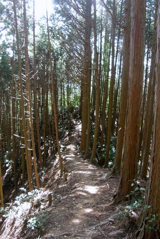 京都一周トレイル 北山西部コース 前半_c0057390_16473588.jpg