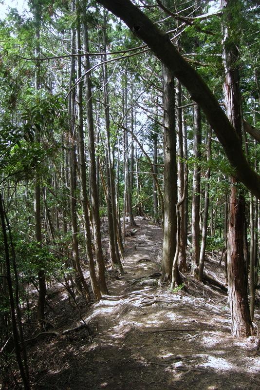 京都一周トレイル 北山西部コース 前半_c0057390_16481256.jpg