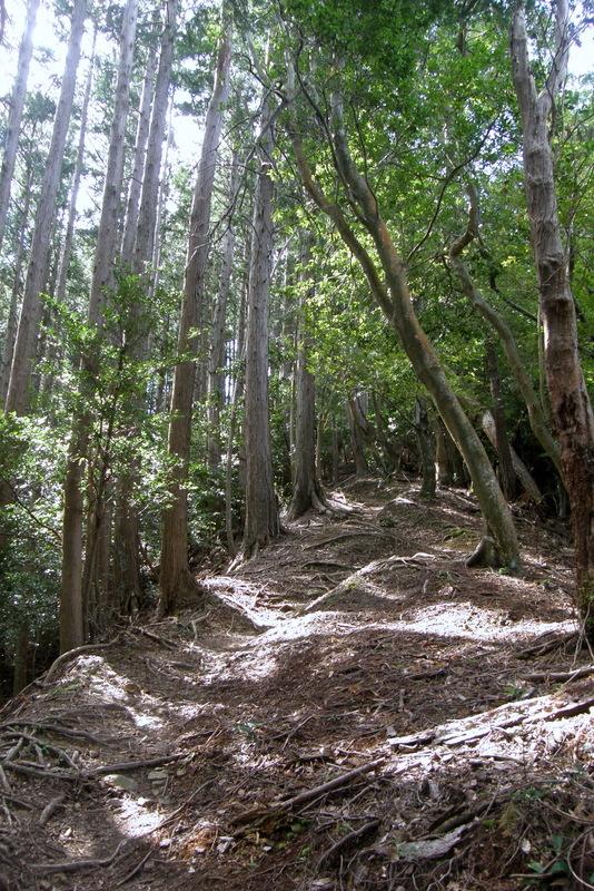 京都一周トレイル 北山西部コース 前半_c0057390_16483407.jpg