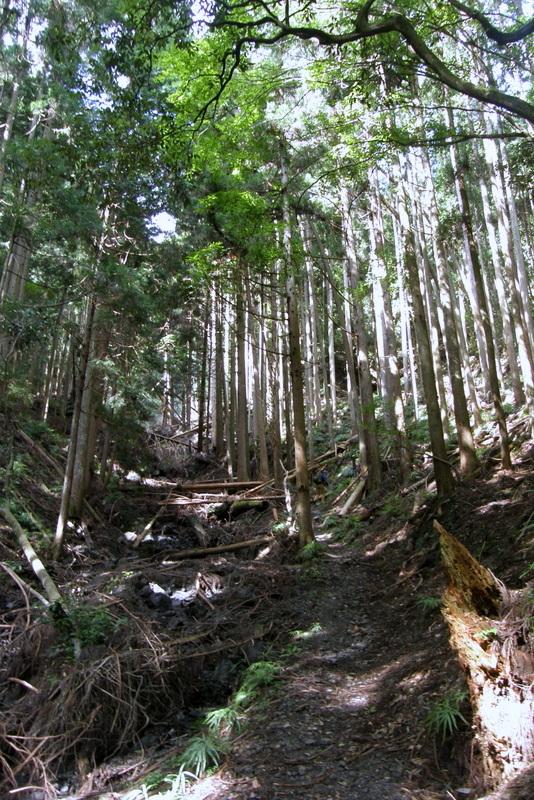 京都一周トレイル 北山西部コース 前半_c0057390_16485306.jpg