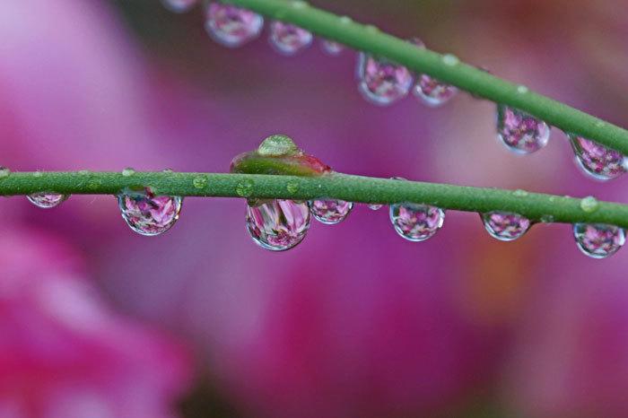 水滴・・・2_d0162994_08425730.jpg