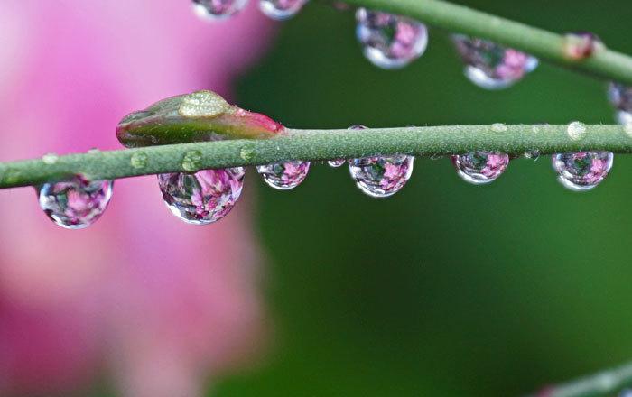 水滴・・・2_d0162994_08432808.jpg