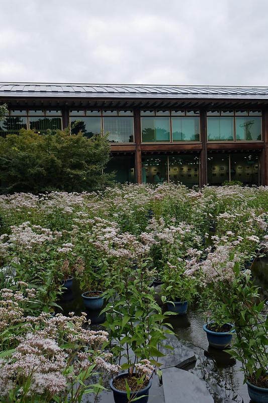 藤袴と和の花展@梅小路公園朱雀の庭_f0032011_20123607.jpg
