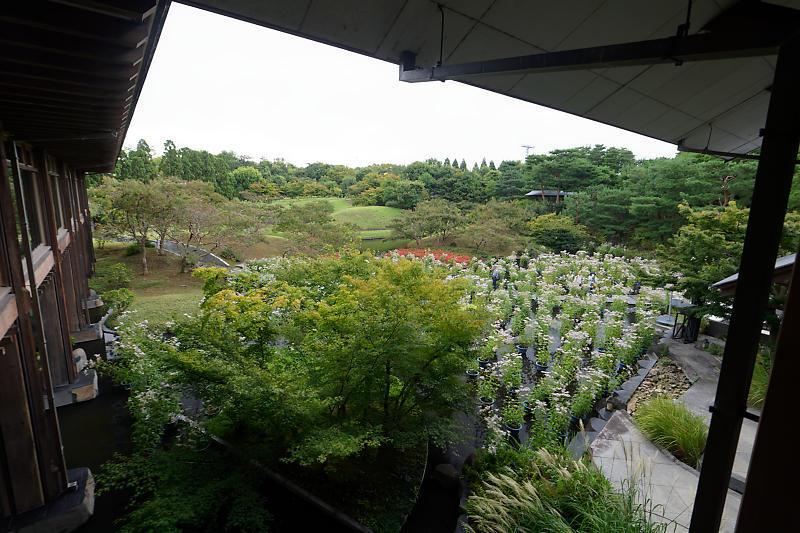 藤袴と和の花展@梅小路公園朱雀の庭_f0032011_20123644.jpg