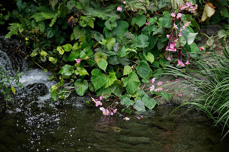 藤袴と和の花展@梅小路公園朱雀の庭_f0032011_20152777.jpg