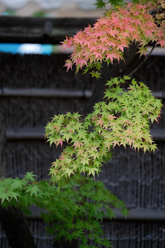 藤袴と和の花展@梅小路公園朱雀の庭_f0032011_20152787.jpg
