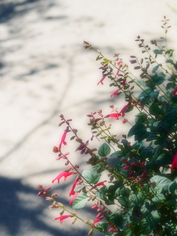 Autumn Garden2_e0169421_21021839.jpg